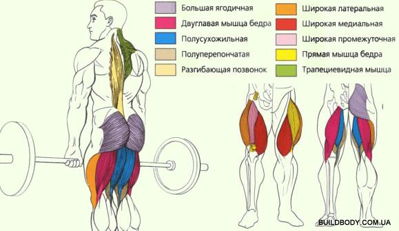 рабочие мышцы, становая тяга