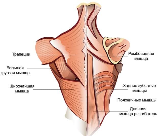 безопасная тренировка мышц спины