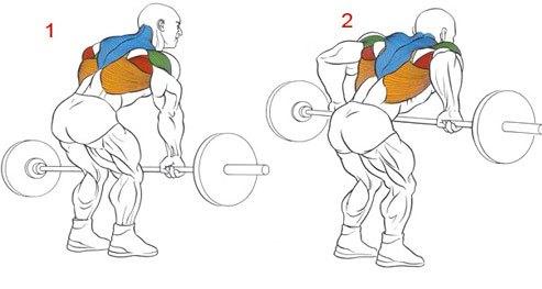 тяга штанги в наклоне какие работают мышцы